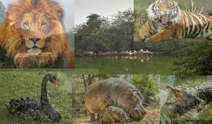 An exciting tour of Delhi zoo (National Zoological Park, Delhi)